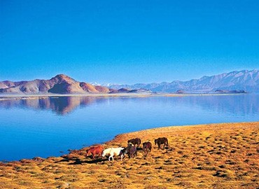 Travelers back from Manasarovar could never forget the beauty of the lake. In the sunshine, the lake water is crystal clean and glimmering blue.