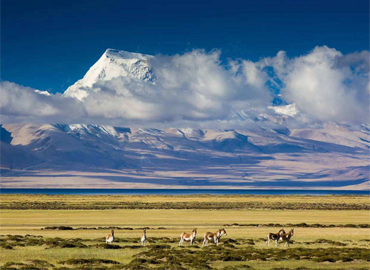 In the lake area, there are unique birds and animals of Tibetan plateau, such as Tibetan antelope, wild horse, etc.