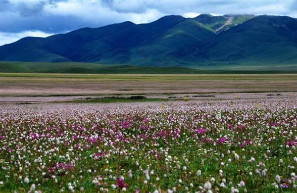 See lush grassland dotted with wild flowers.