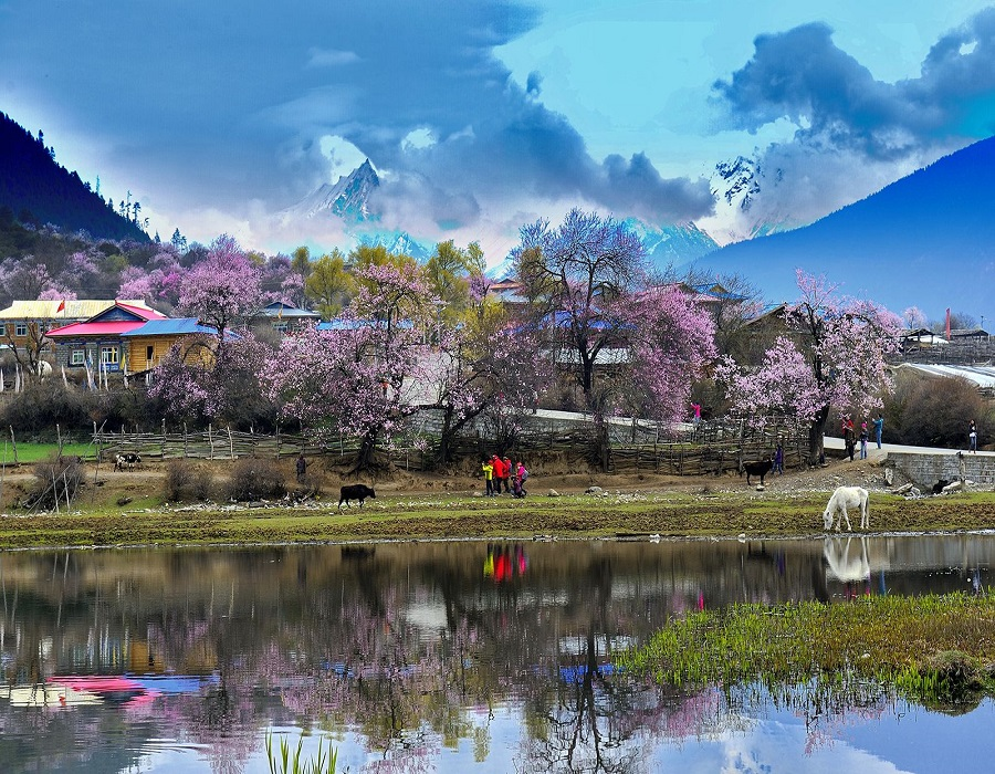 This is the best Peach Flower Tourism and Culture Festival with various of interesting activities and wonderful content that you never have.