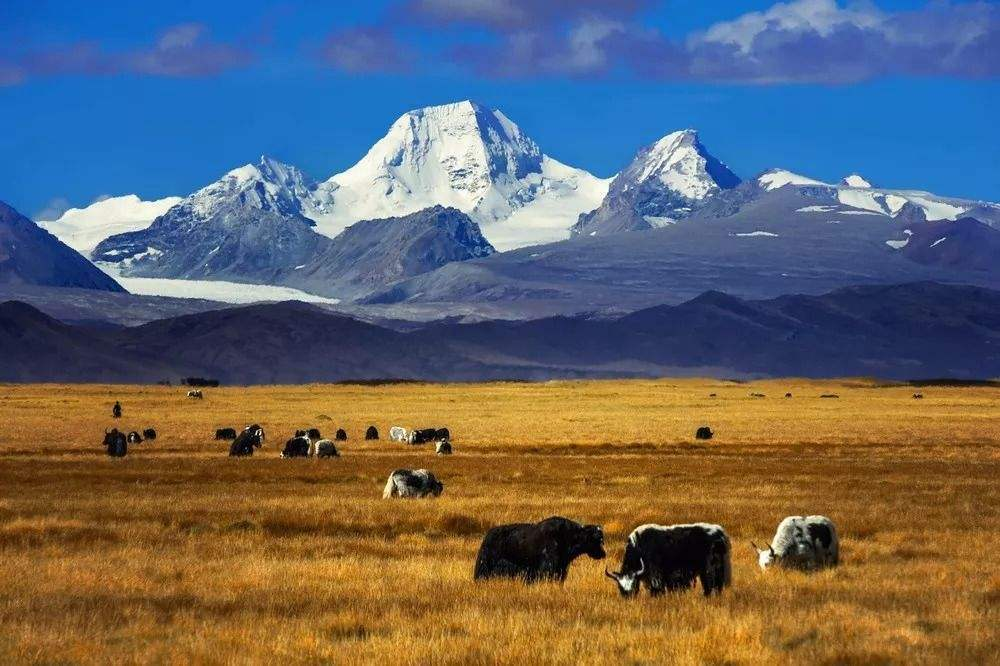 Golden landscape in Chamdo.