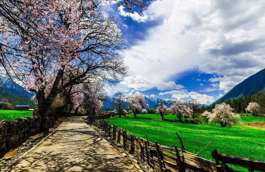 Catch the most beautiful moment of Nyingchi in Spring.