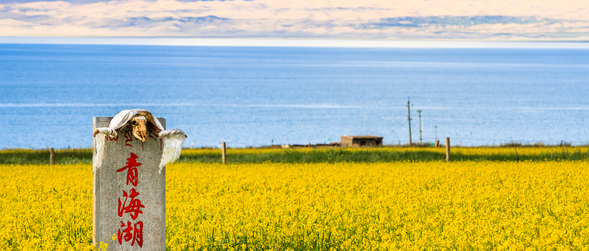 Every June to Auguest, you will see the most beautiful Qinghai Lake.
