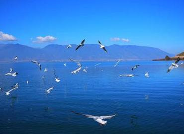 The biggest fun to visit Dian lake is to feed sea gulls.