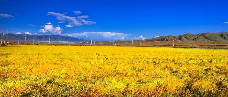 Jinyintan Prairie scenery