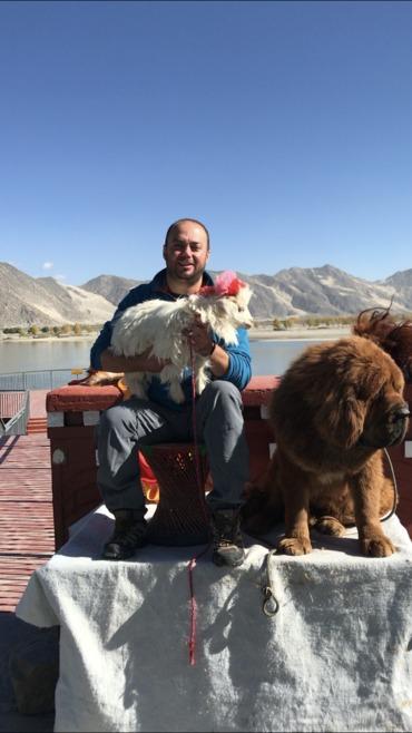 cute sheep and Tibet mastiff