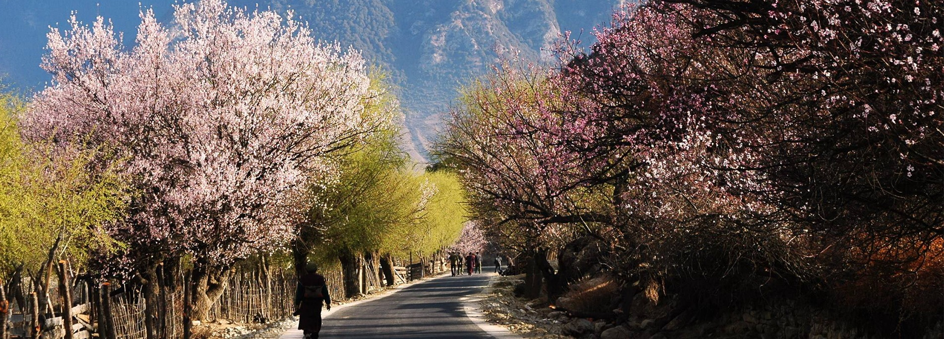 Nyingchi is full of blooming peach flowers every Spring.