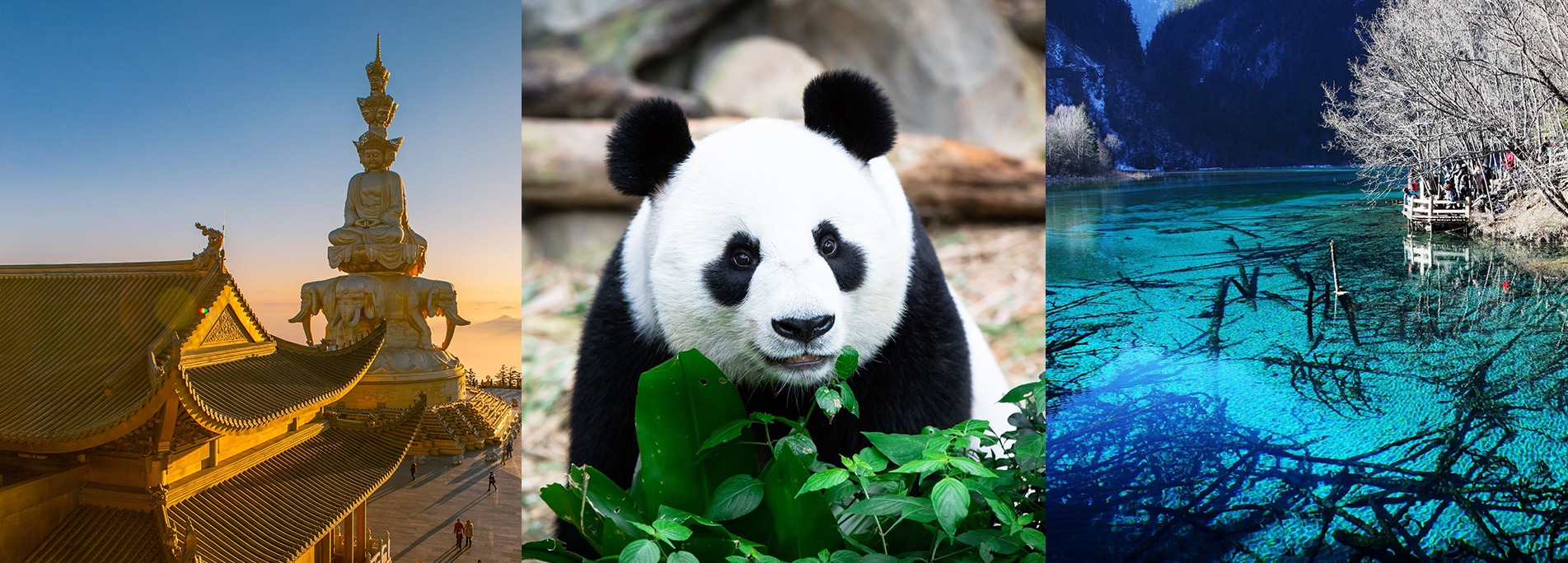 You can visit Sichuan by joining various group tours going to Jiuzhai Valley, Panda Breeding Center, Leshan Giant Buddha, etc.