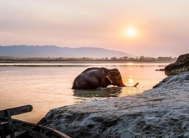 See an elephant's bathing.