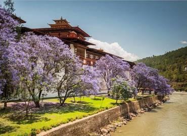 Punakha Dzong is the most beautiful Dzong in Bhutan.